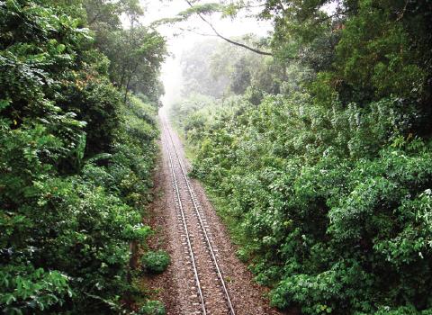 The-Green-Corridor-2