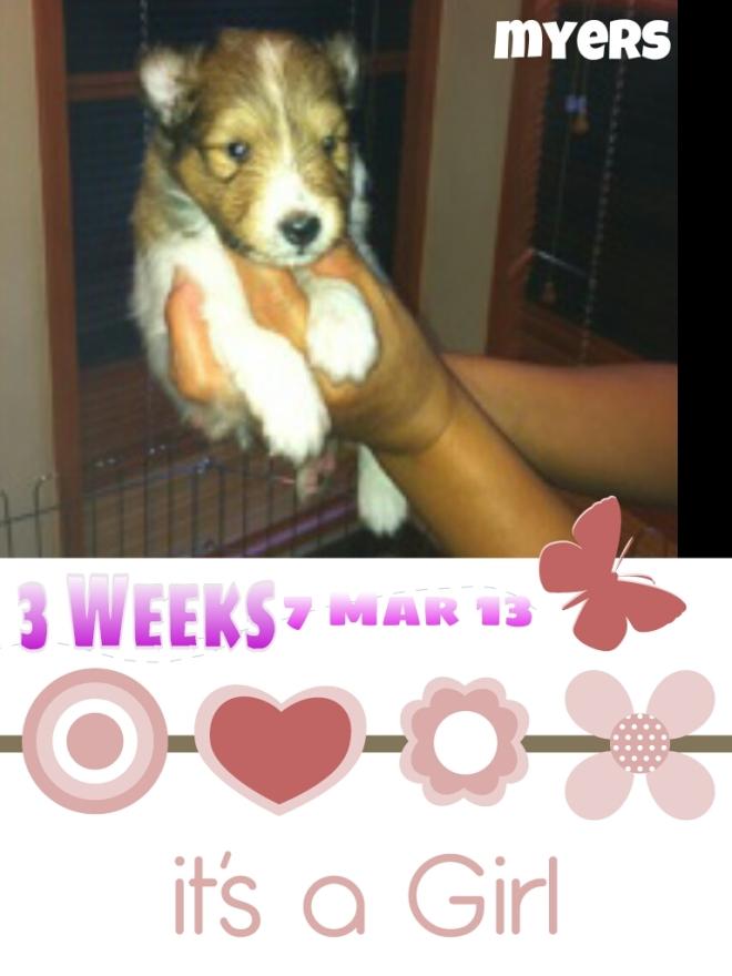 3 Weeks (07.03.13)