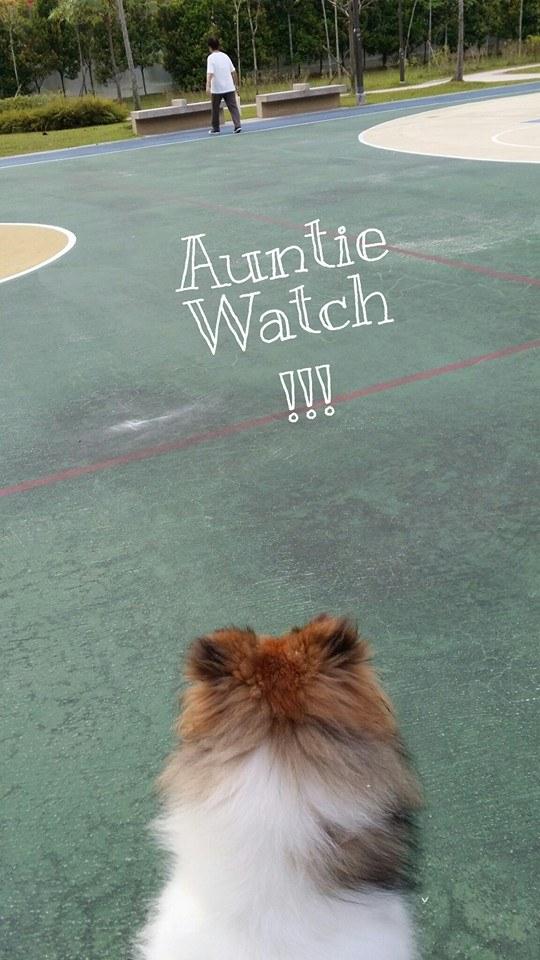 auntie watch