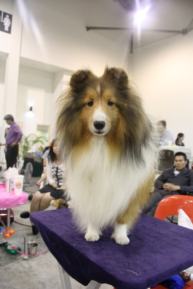 200th SKC & 29th AKU Championship Dog Show